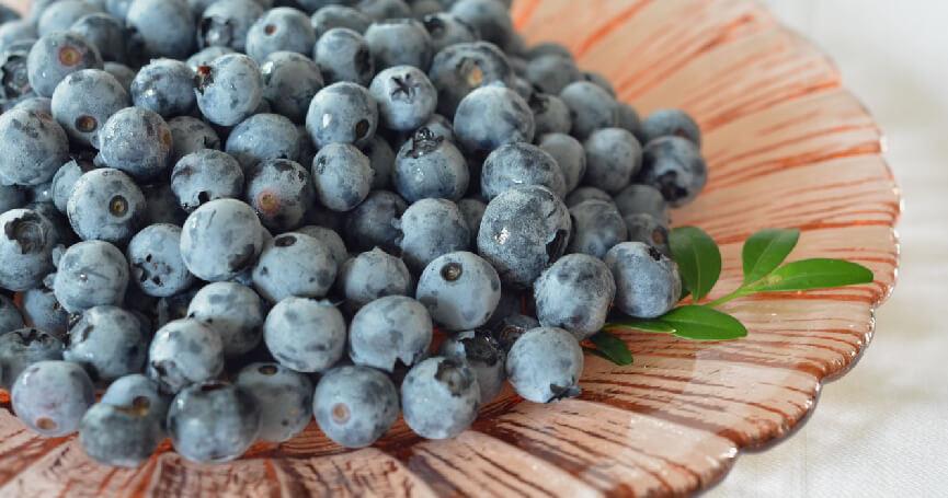 山桑子v.s.藍莓怎麼分? 高含量花青素~時常使用3C產品的你不可錯過!